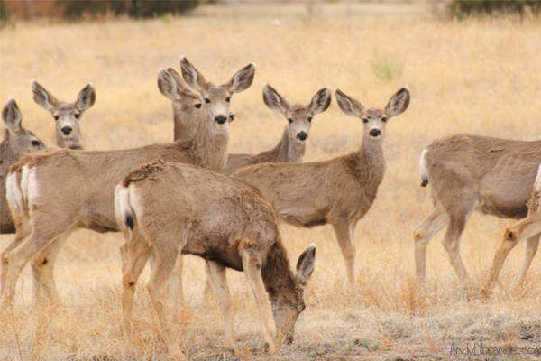 Post image for creede wildlife 5
